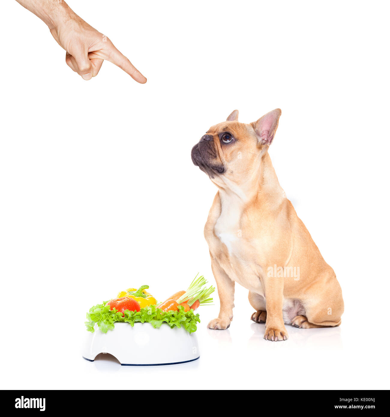 Healthy Dog Food Banner