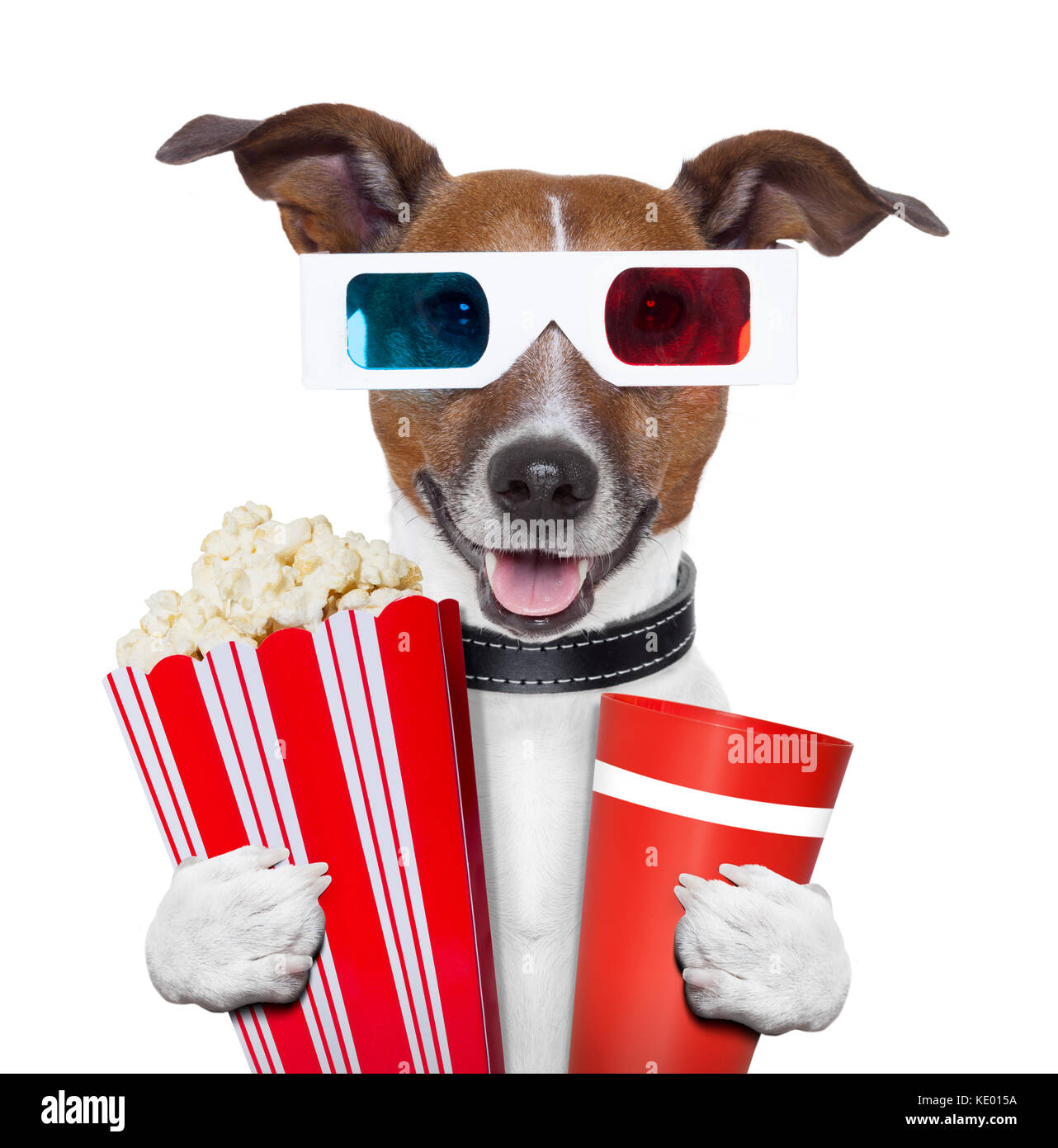 Stock Photo Dog Eating Popcorn