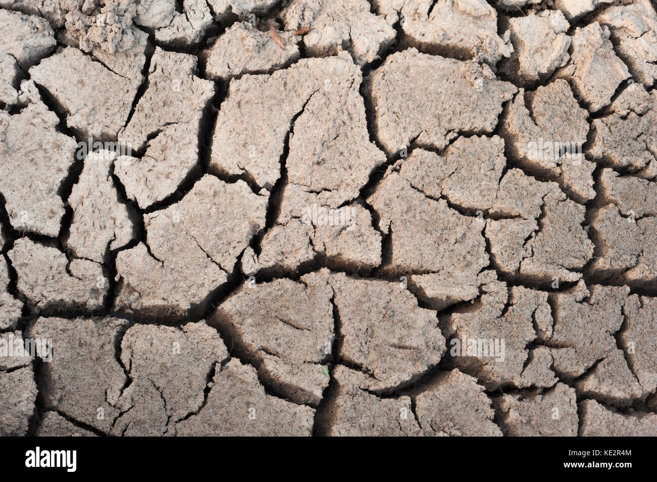 Dried mud in the Pantanal during the dry season - Stock Image