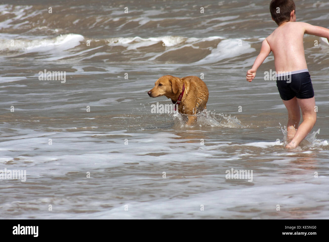 Small boy in swimming trunks and dog playing in the sea - Stock Image