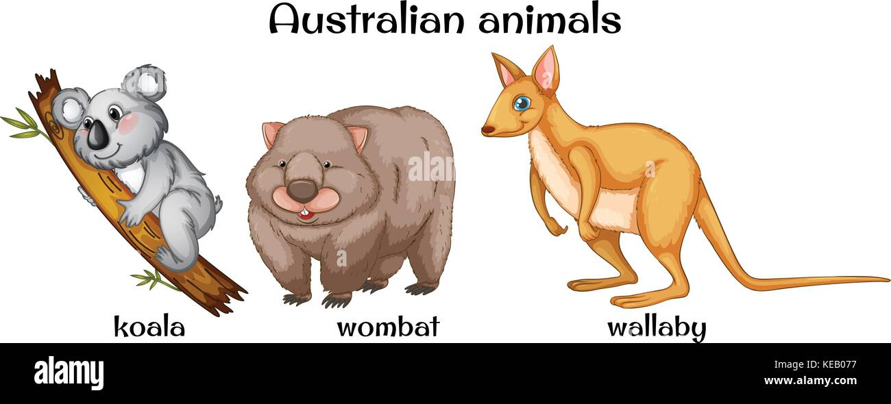 Animal Flashcards Animal printables Animal PowerPoint