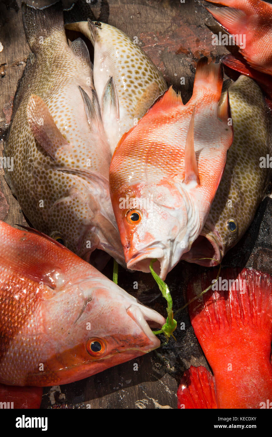 Seychelles tropical fish stock photos seychelles for Reef fish for sale