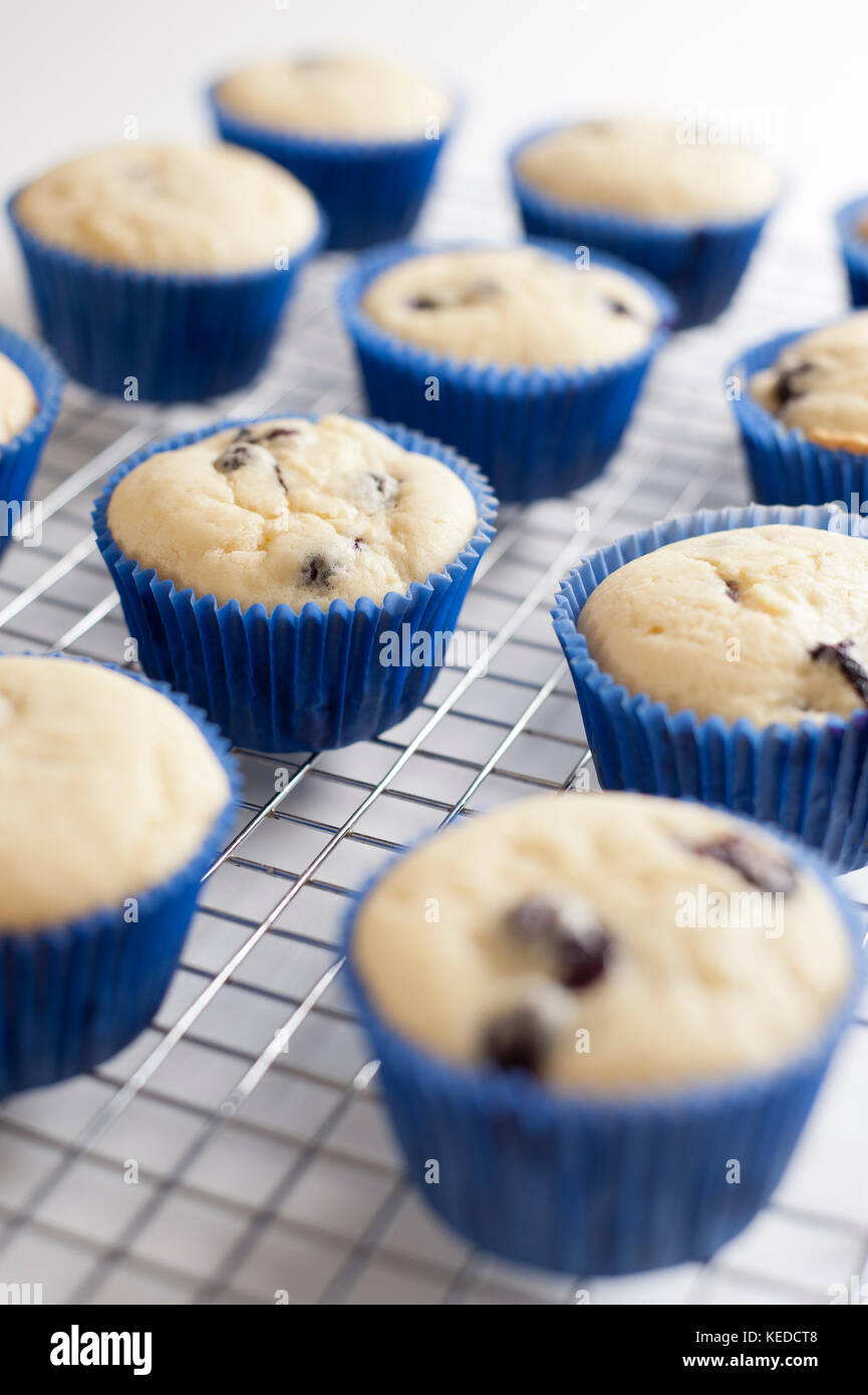 Blueberry cupcakes production - Stock Image