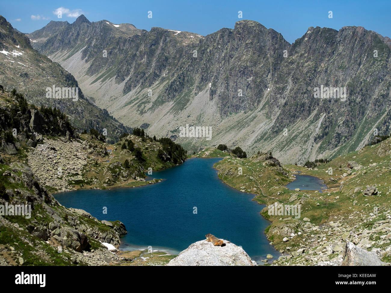 Marmot sunbathing.Aigüestortes National Park.Pyrenees.Catalunya.Spain - Stock Image