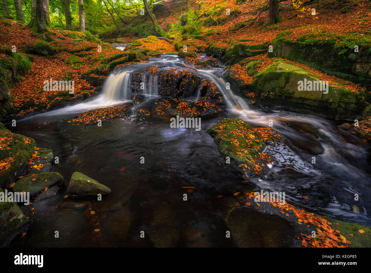 Autunm river in the forest - Ireland - Stock Image