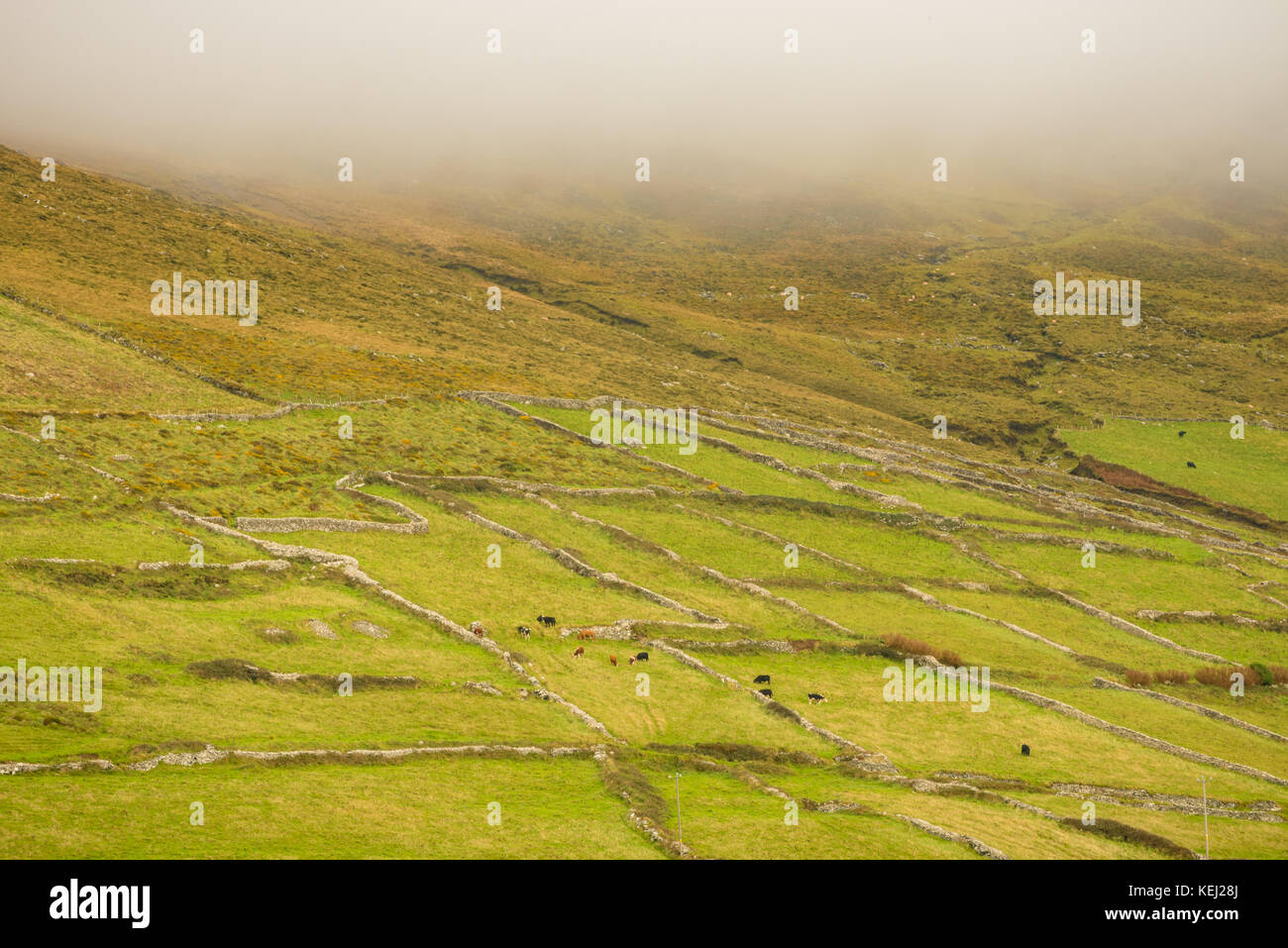 Irish coutryside in Kerry - Ireland - Stock Image