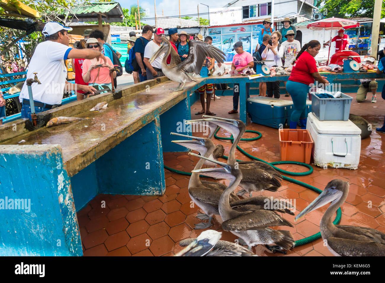 Ecuadorian seafood stock photos ecuadorian seafood stock for Local fish market