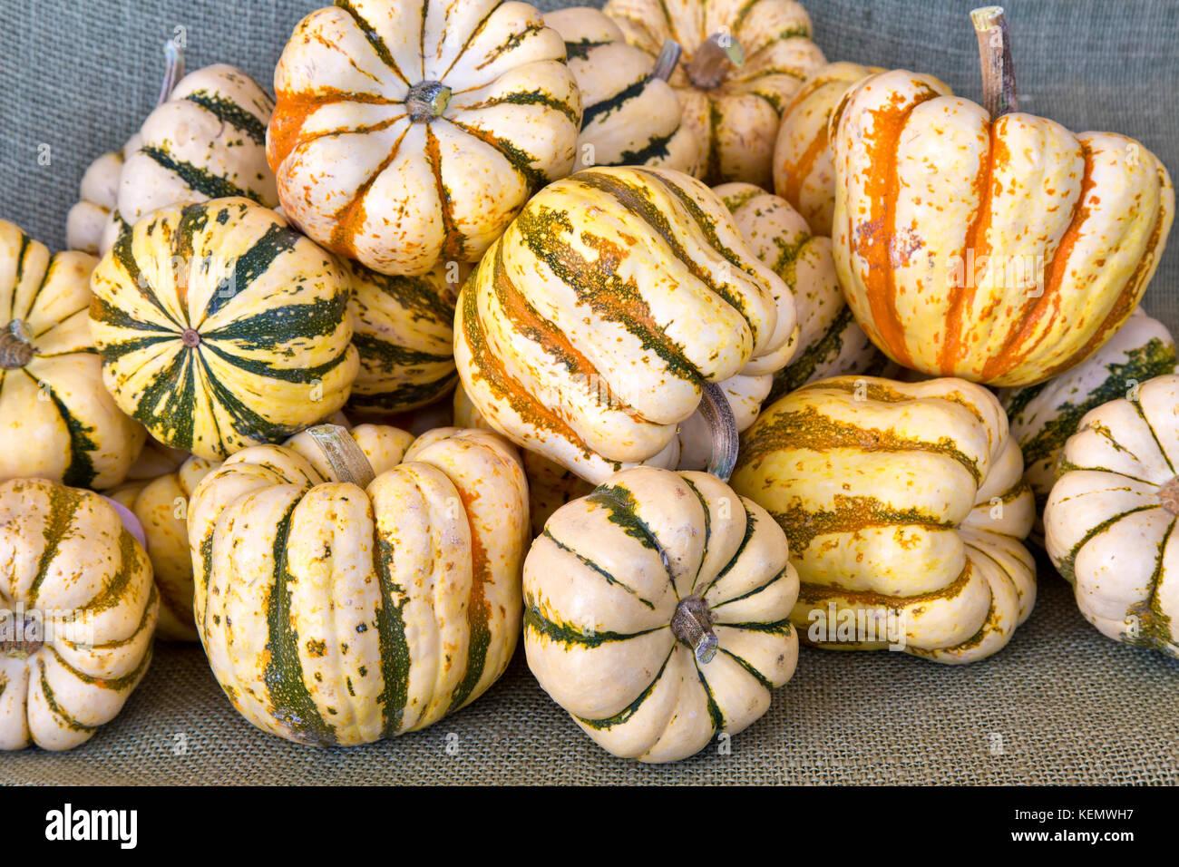 Harvested Carnival & Sweet Dumpling' squash. - Stock Image