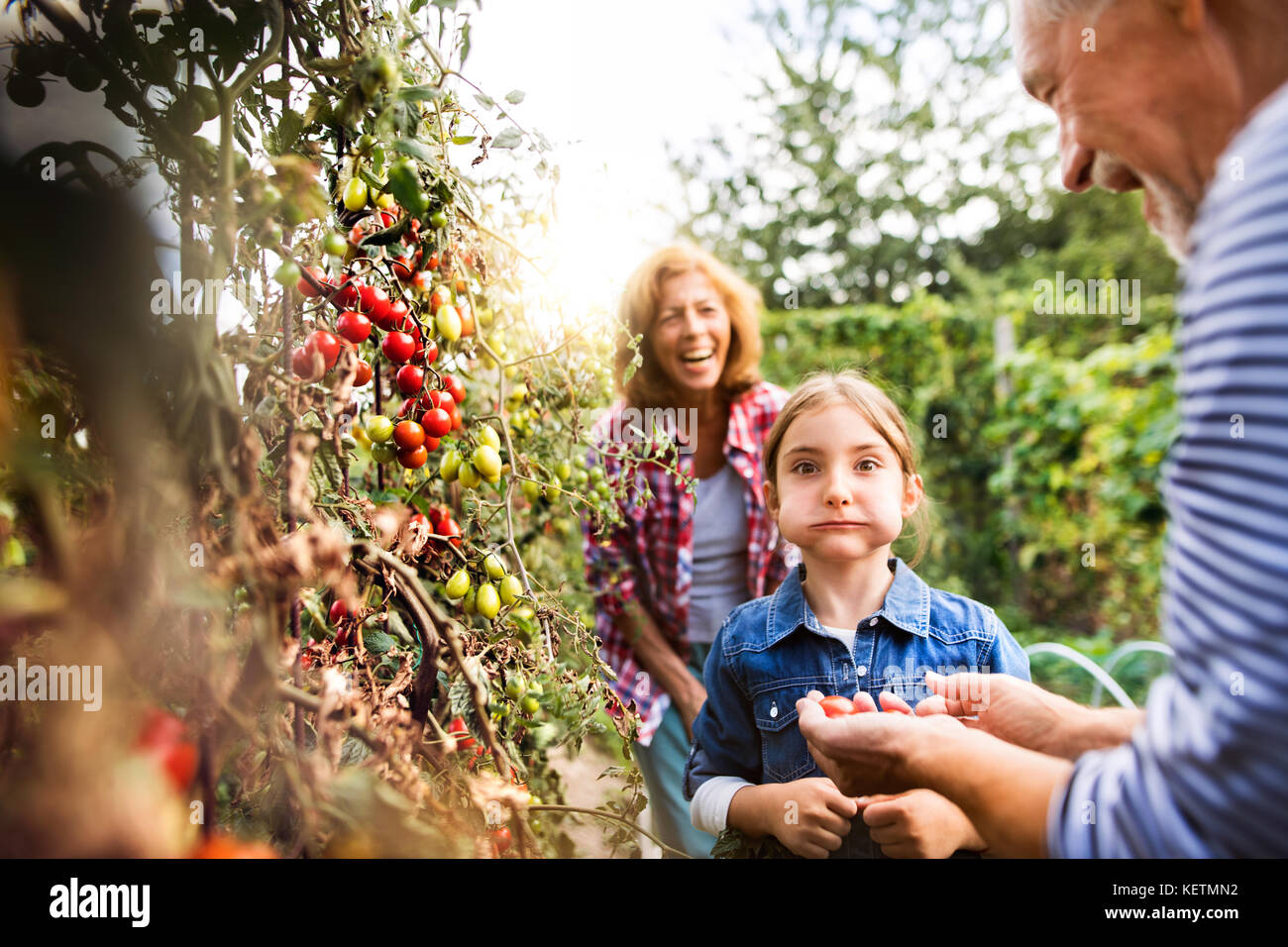Senior couple with grandaughter gardening in the backyard garden - Stock Image