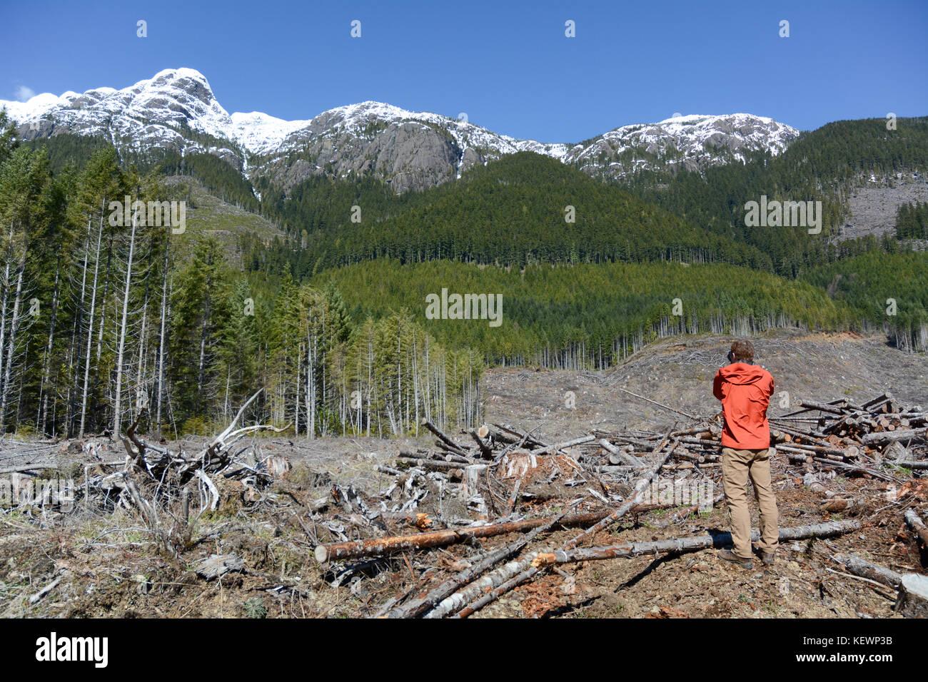 An environmentalist surveys a clear-cut logging block and slash on a mountainside near Port Alberni, on Vancouver - Stock Image
