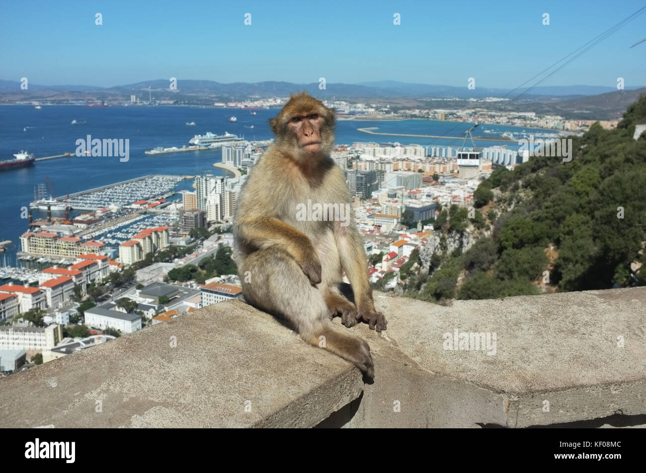 A Barbary macaque halfway up the rock, Gibraltar, September 2017 - Stock Image
