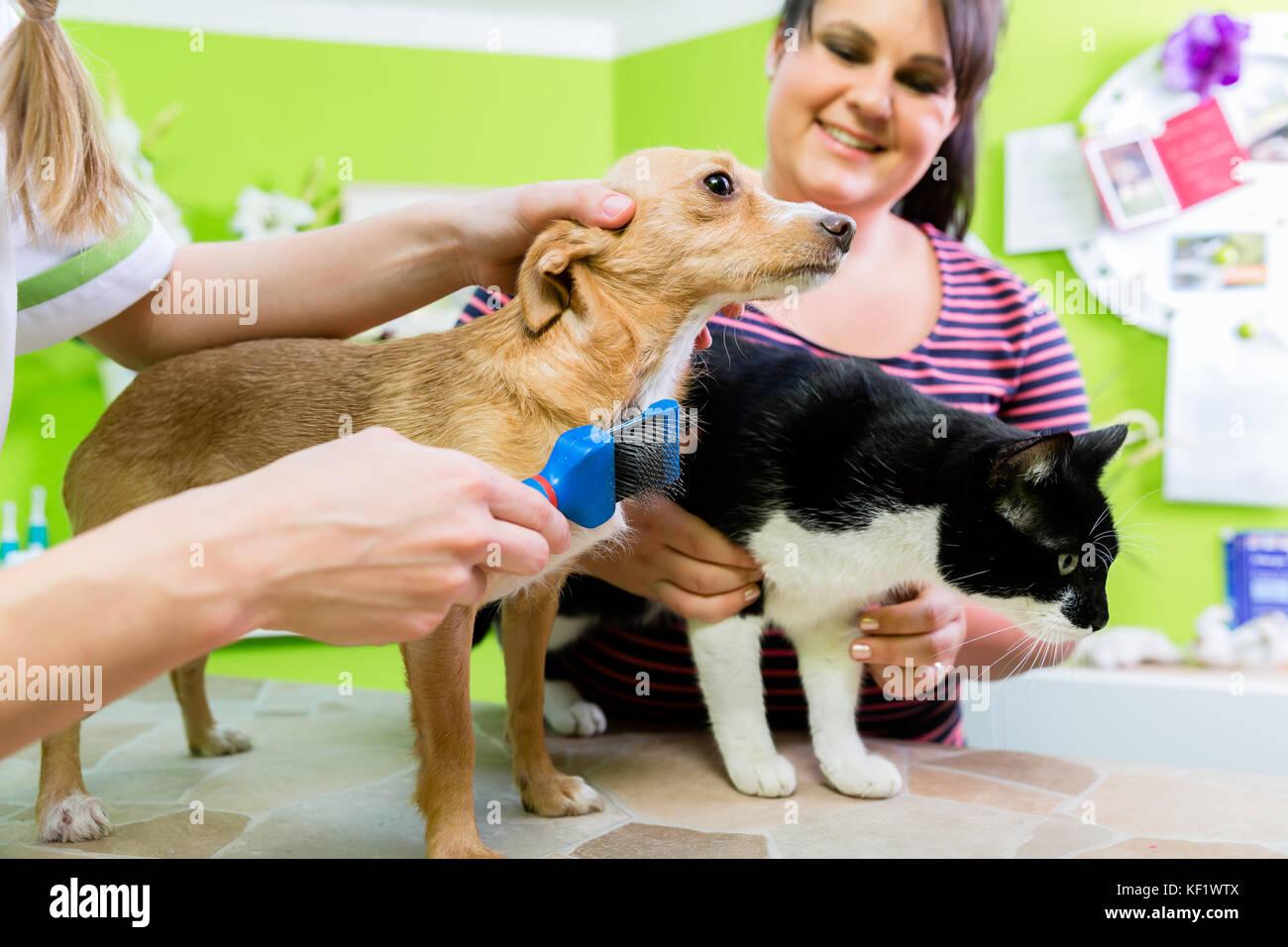 Hairdresser Visit Stock Photos Amp Hairdresser Visit Stock