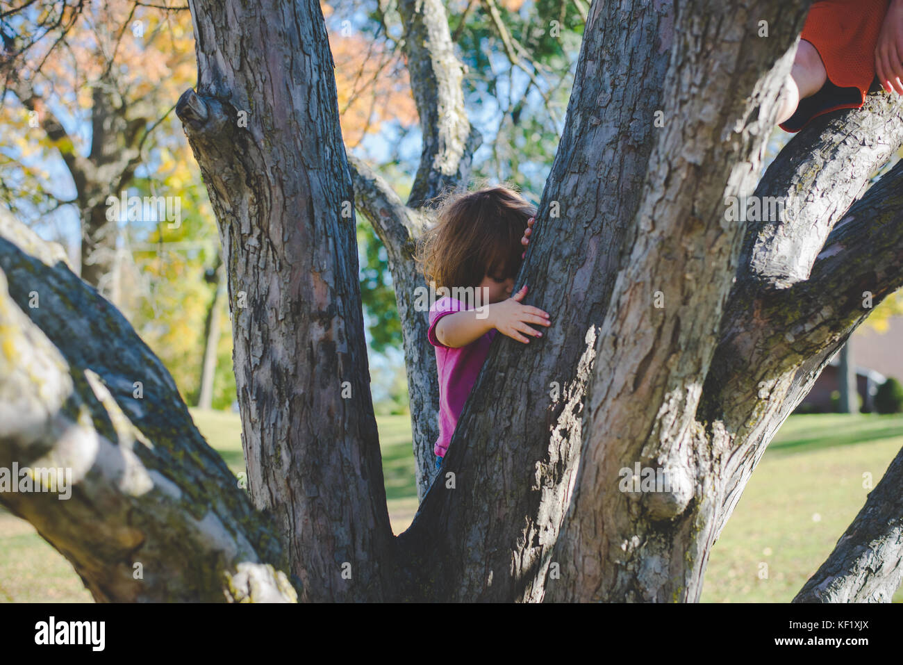 Child climbing a tree - Stock Image