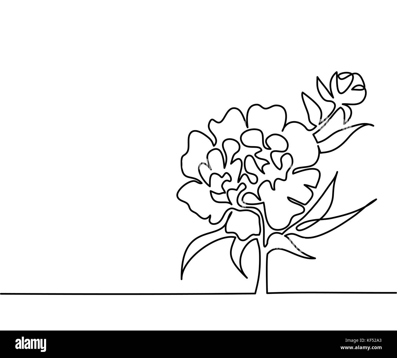 Continuous Line Drawing Flowers : White peony drawing stock photos