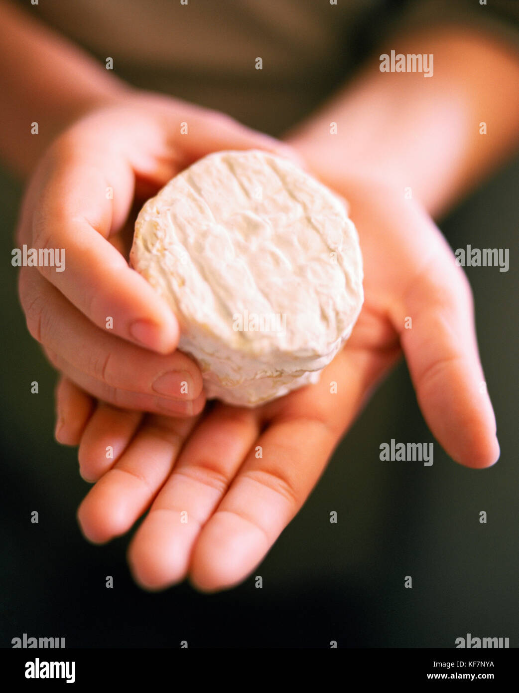 USA, California, Sebastopol, wheel of Redwood Hill Boucheret cheese, Redwood Hill Farm and Creamery - Stock Image