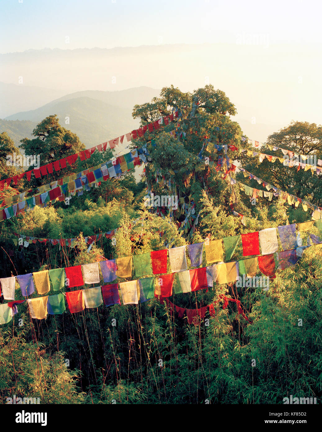 INDIA, West Bengal, colorful prayer flags hanging over trees, Tiger Hill - Stock Image