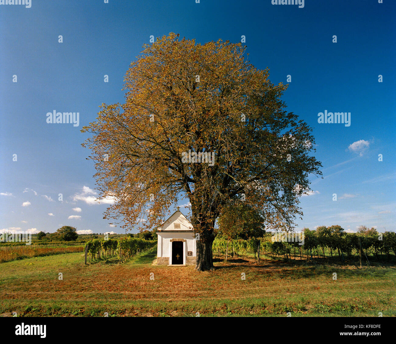 AUSTRIA, Oggau, small Turkish Crypt rests under a tree on the edge of a vineyard, Burgenland - Stock Image