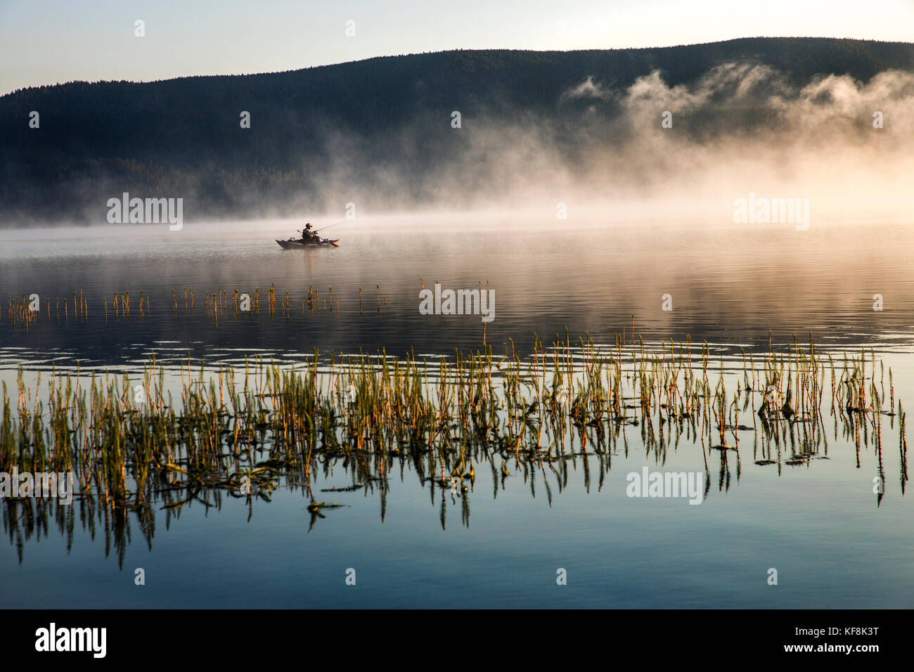 USA, Oregon, Paulina Lake, Brown Cannon, a fisherman goes through the reeds and fog in his boat - Stock Image