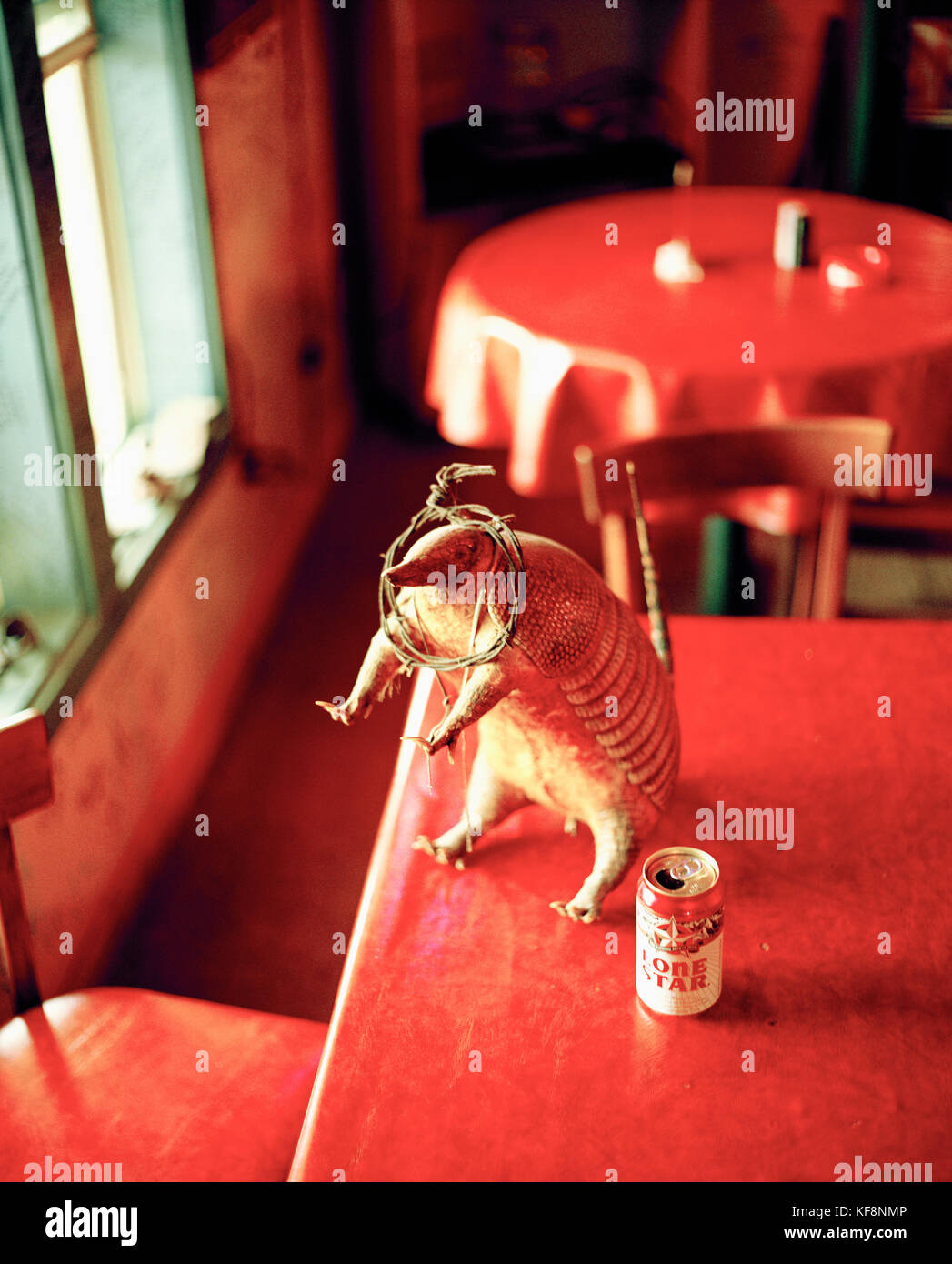 USA, Texas, stuffed armadillo and a Lone Star beer, Harry's BBQ, Willow City - Stock Image
