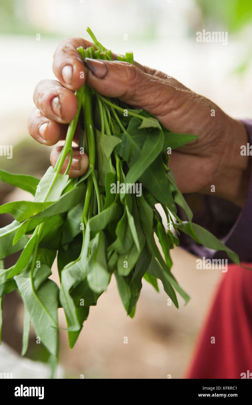 VIETNAM, Hue, a woman holds leafy green vegetables for sale at a rural roadside market - Stock Image