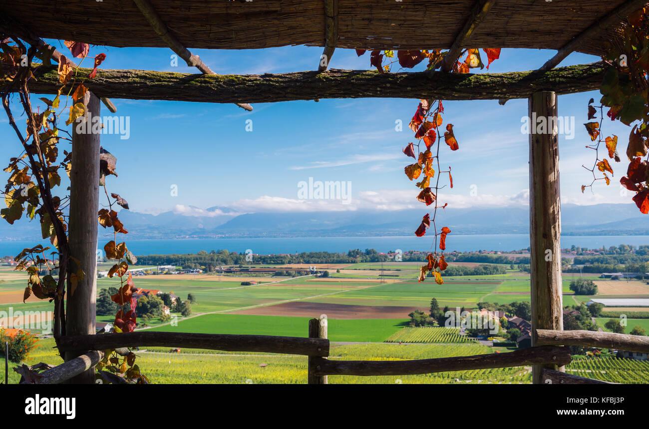 Frame in frame of vineyards in Switzerland overlooking Lake Geneva during the autumn Stock Photo