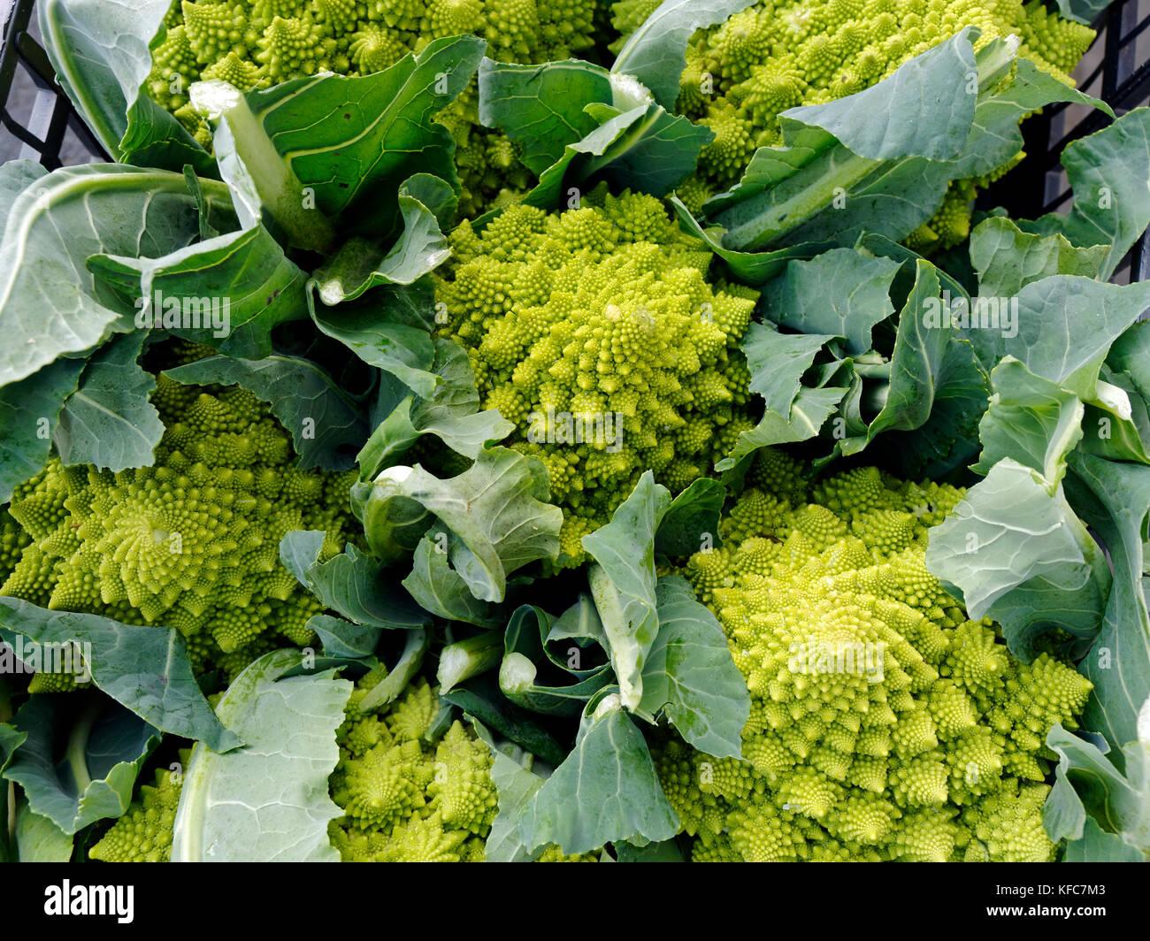 Come cucinare il broccolo romanesco