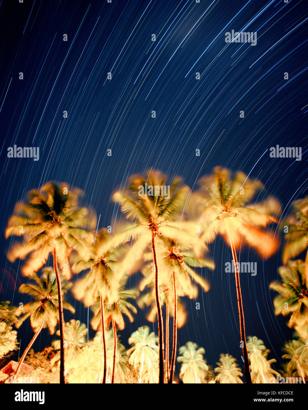 MADAGASCAR, palm trees with star trails at night, Anjajavy Hotel - Stock Image