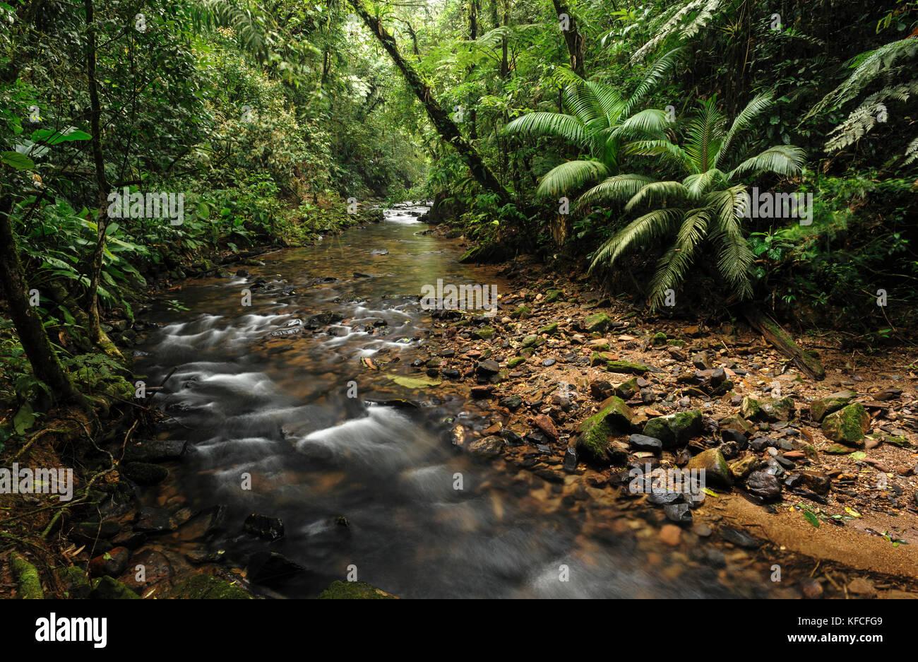 A mountain creek in the Atlantic Rainforest of SE Brazil - Stock Image