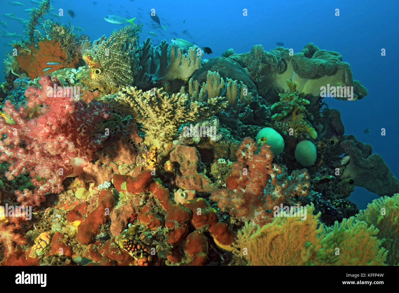 Colorful Coral Reef against Blue Water. Dampier Strait, Raja Ampat, Indonesia - Stock Image