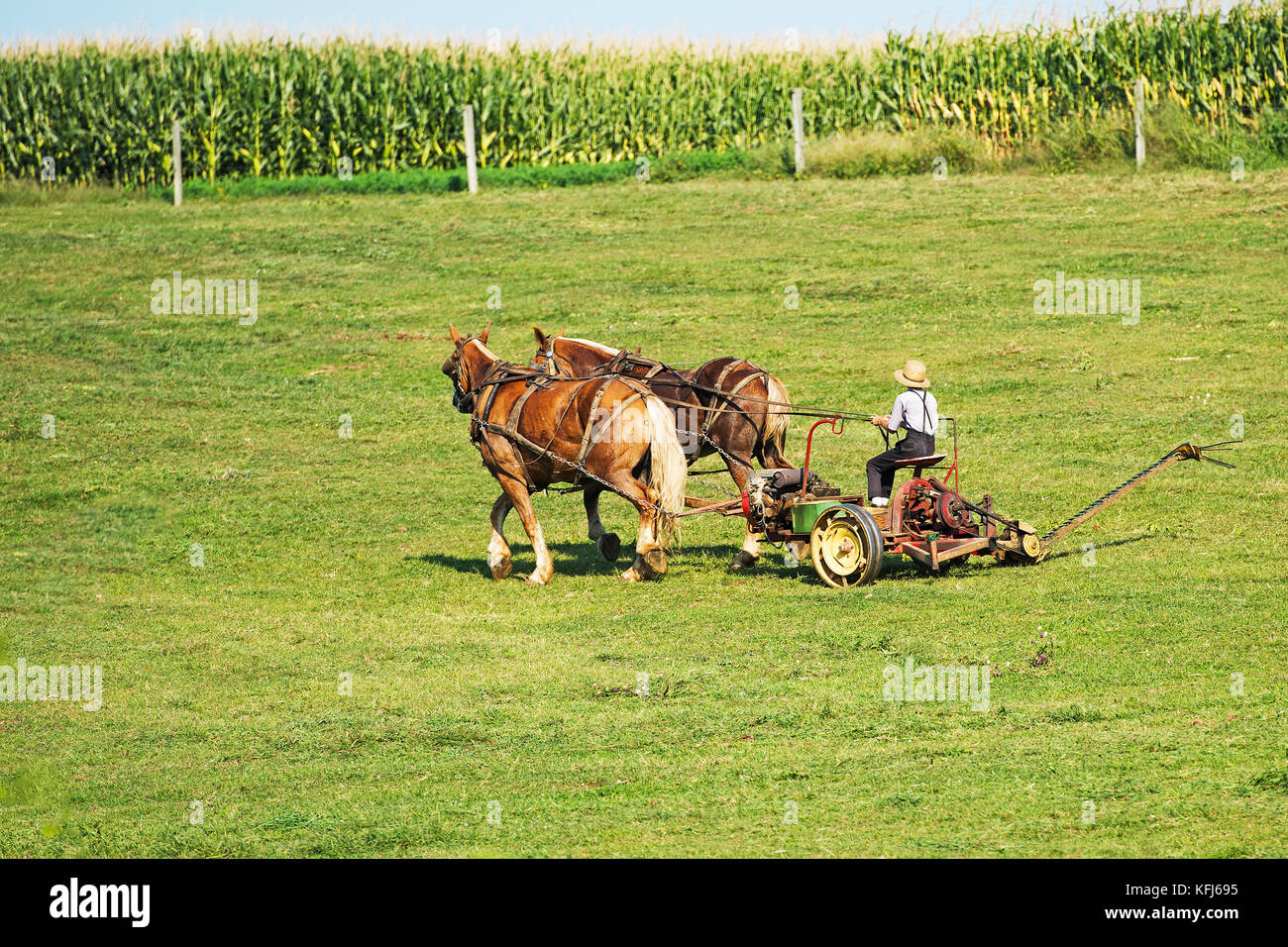 Amish Farmer Ploqing the Land - Stock Image