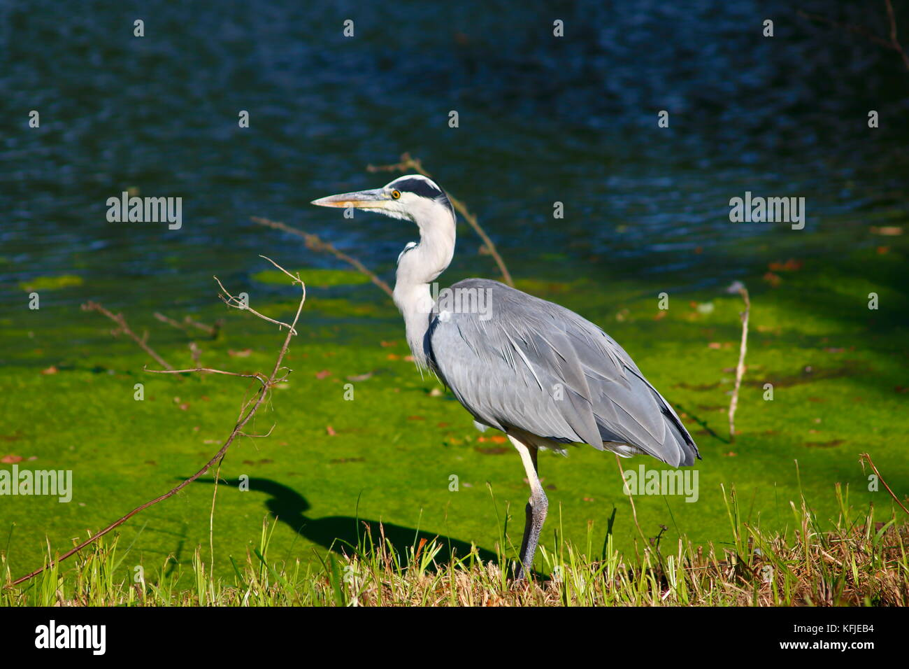 See teich stock photos see teich stock images alamy for Steine teich
