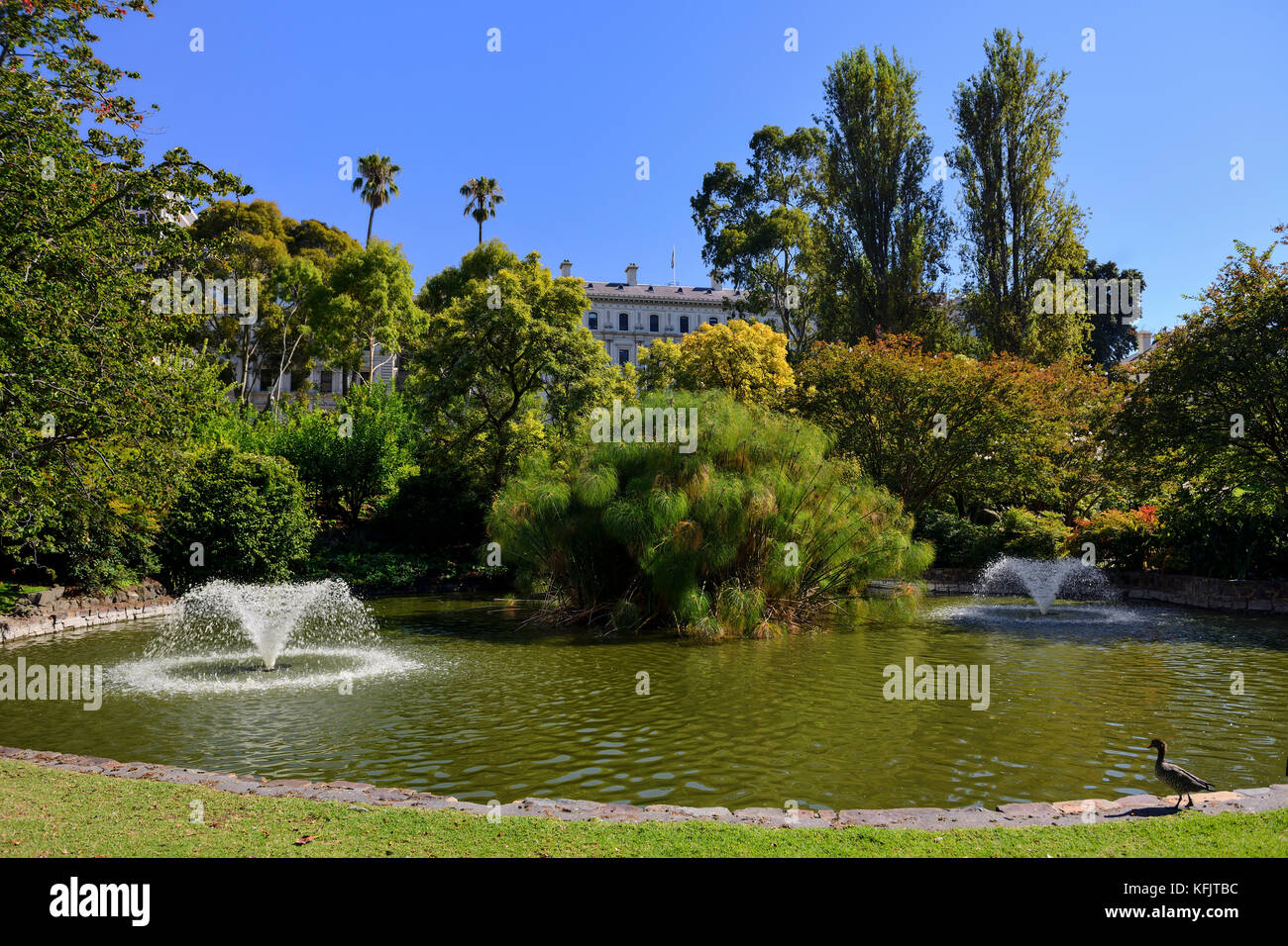 Ornamental pond stock photos ornamental pond stock for Ornamental pond