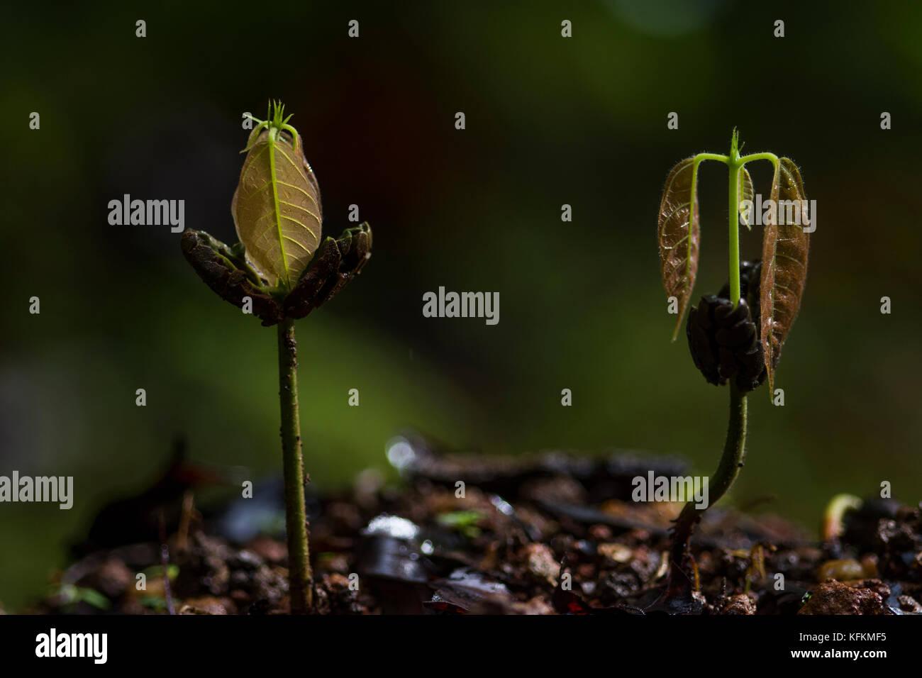 seed germination eei