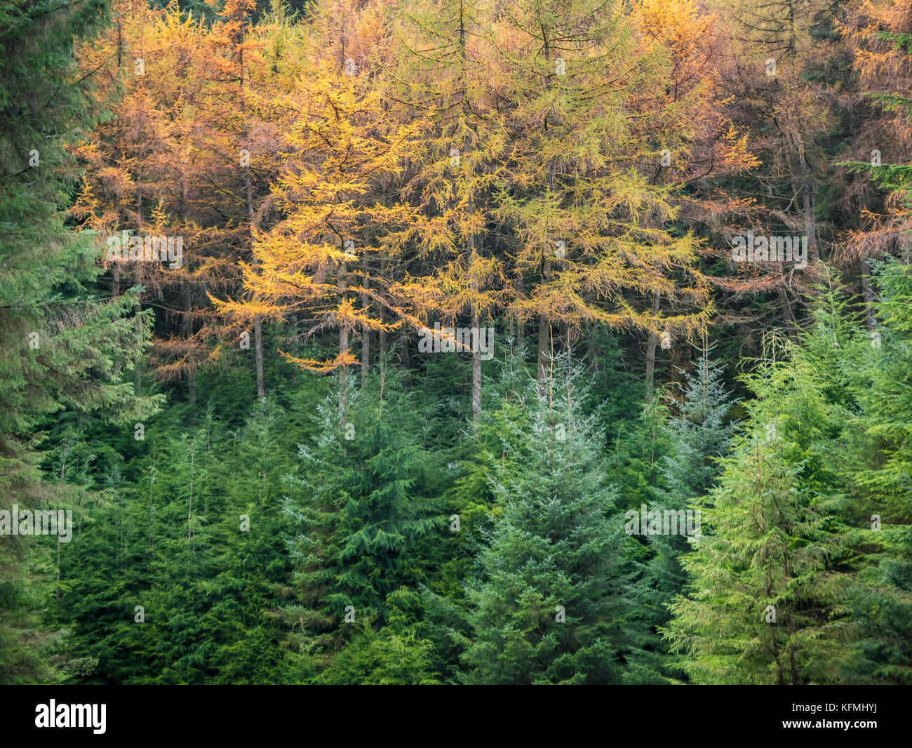 Landscape of Wicklow Mountains in autunm colors - Stock Image