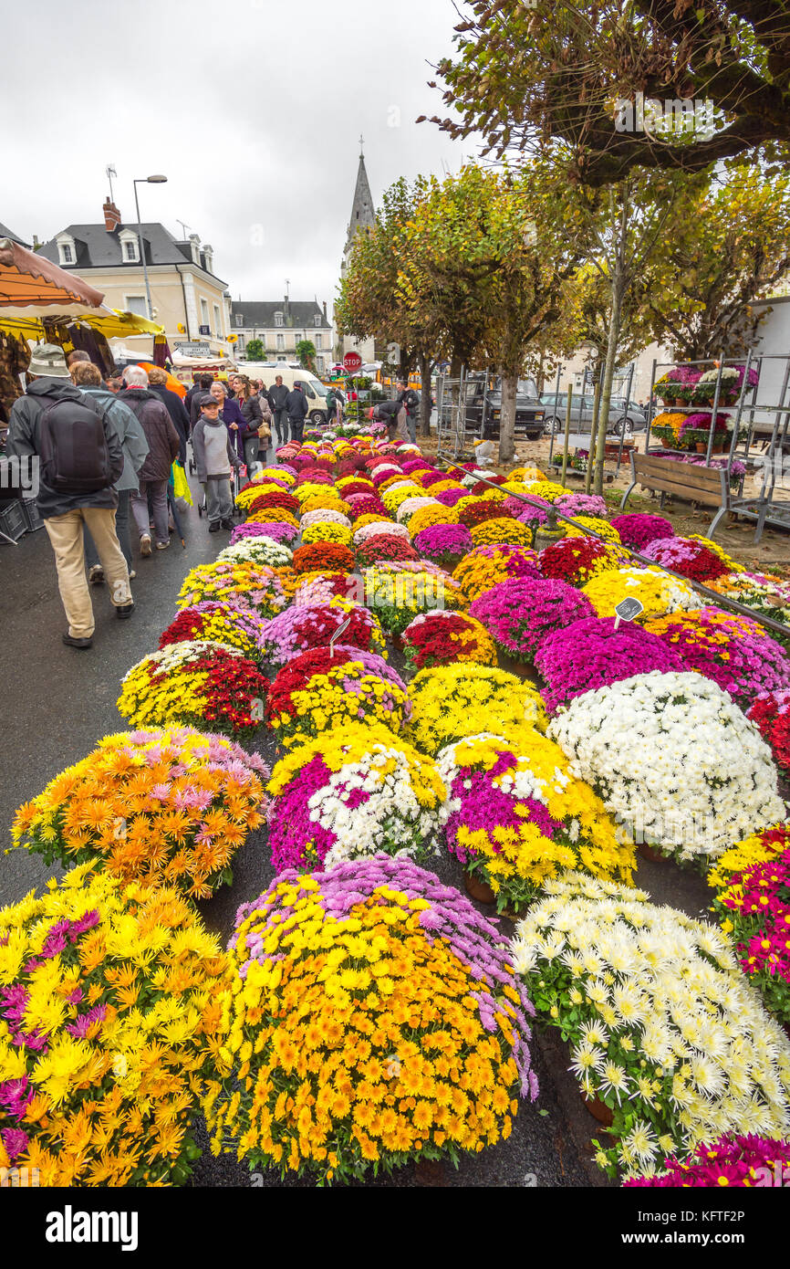 Pots of Michaelmas Daisies in street market - France. - Stock Image