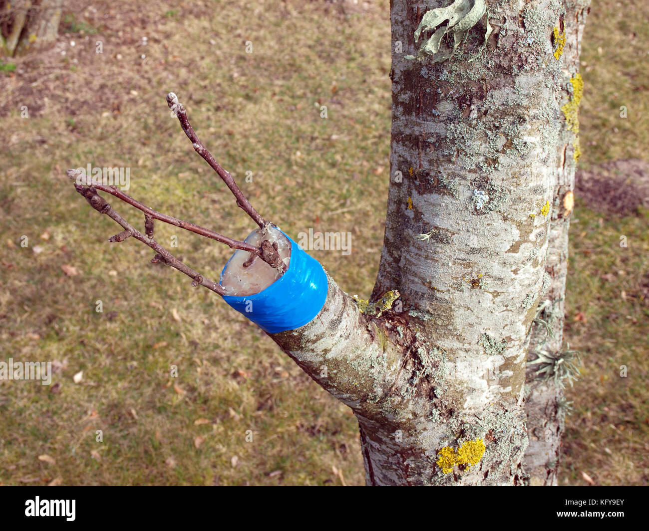 Посадка деревьев весной как сажать плодовые деревья 4
