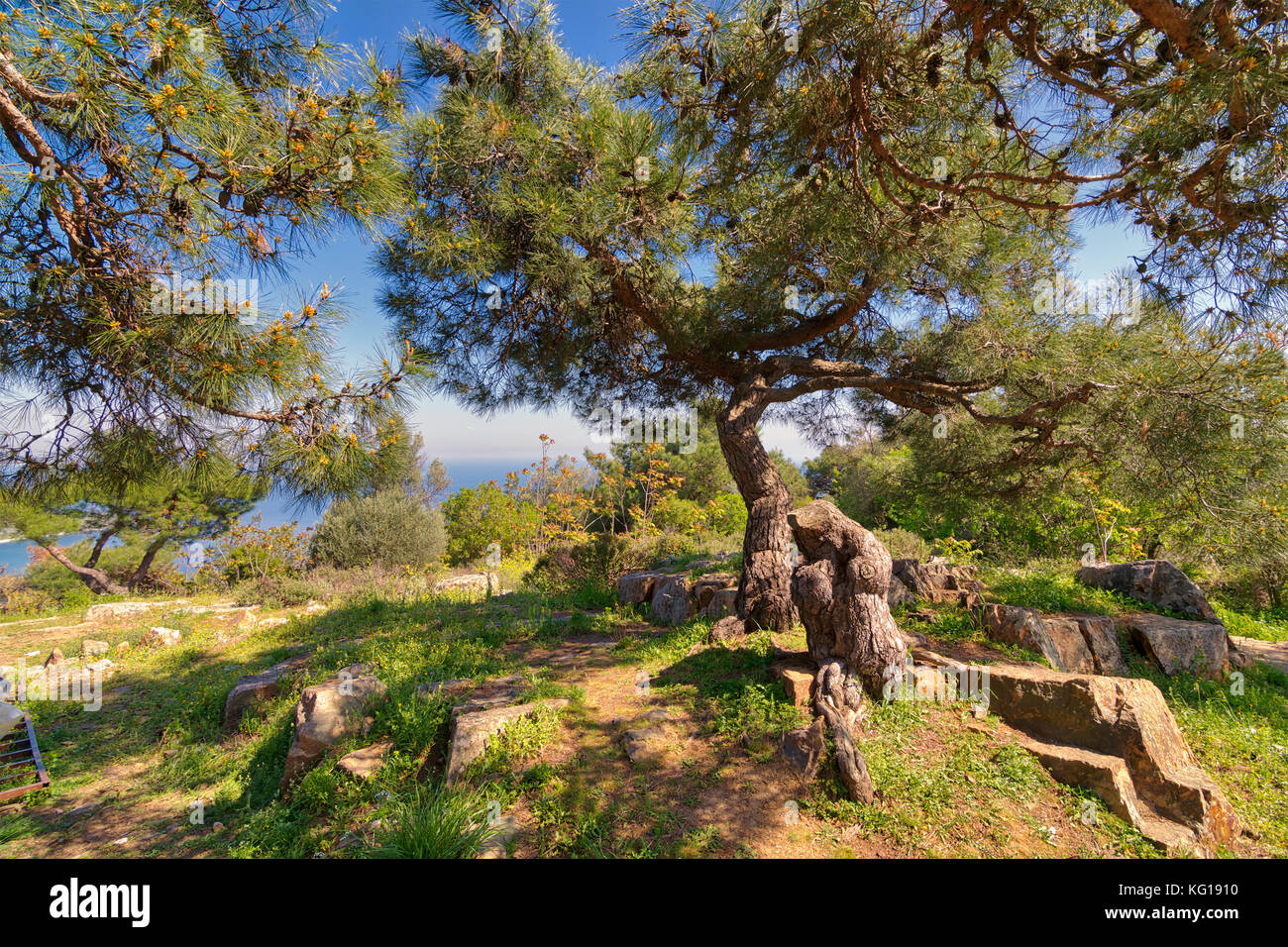 Spring meadow with green tree, grass, rocks and clear blue sky at the top of mountains of Buyukada island (Princes - Stock Image