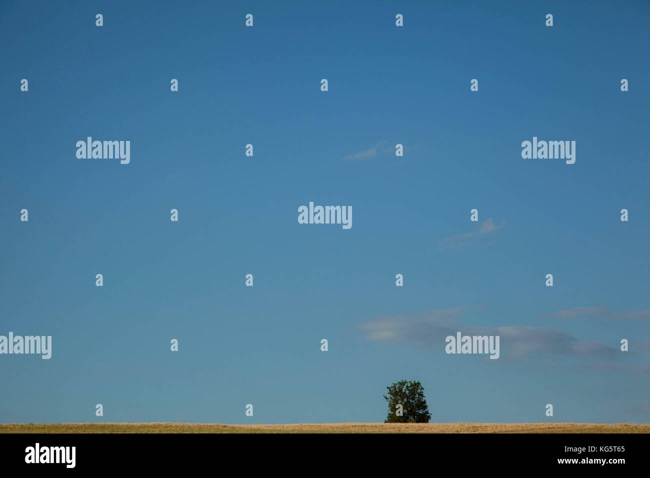 A loan tree grows out from the horizon on the Grand Union Canal in Leicester, England. - Stock Image
