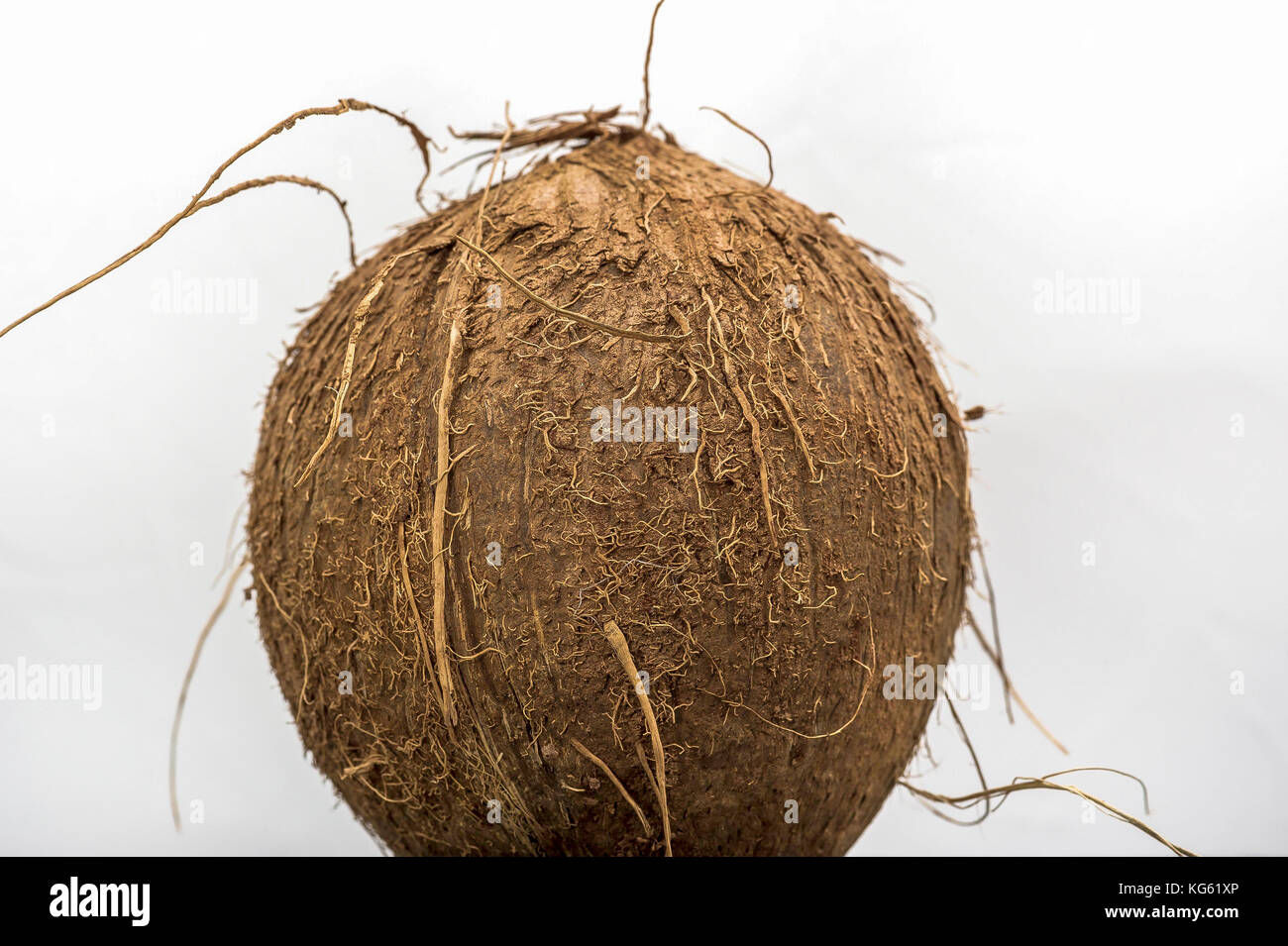 coconut fibres stock photos coconut fibres stock images. Black Bedroom Furniture Sets. Home Design Ideas