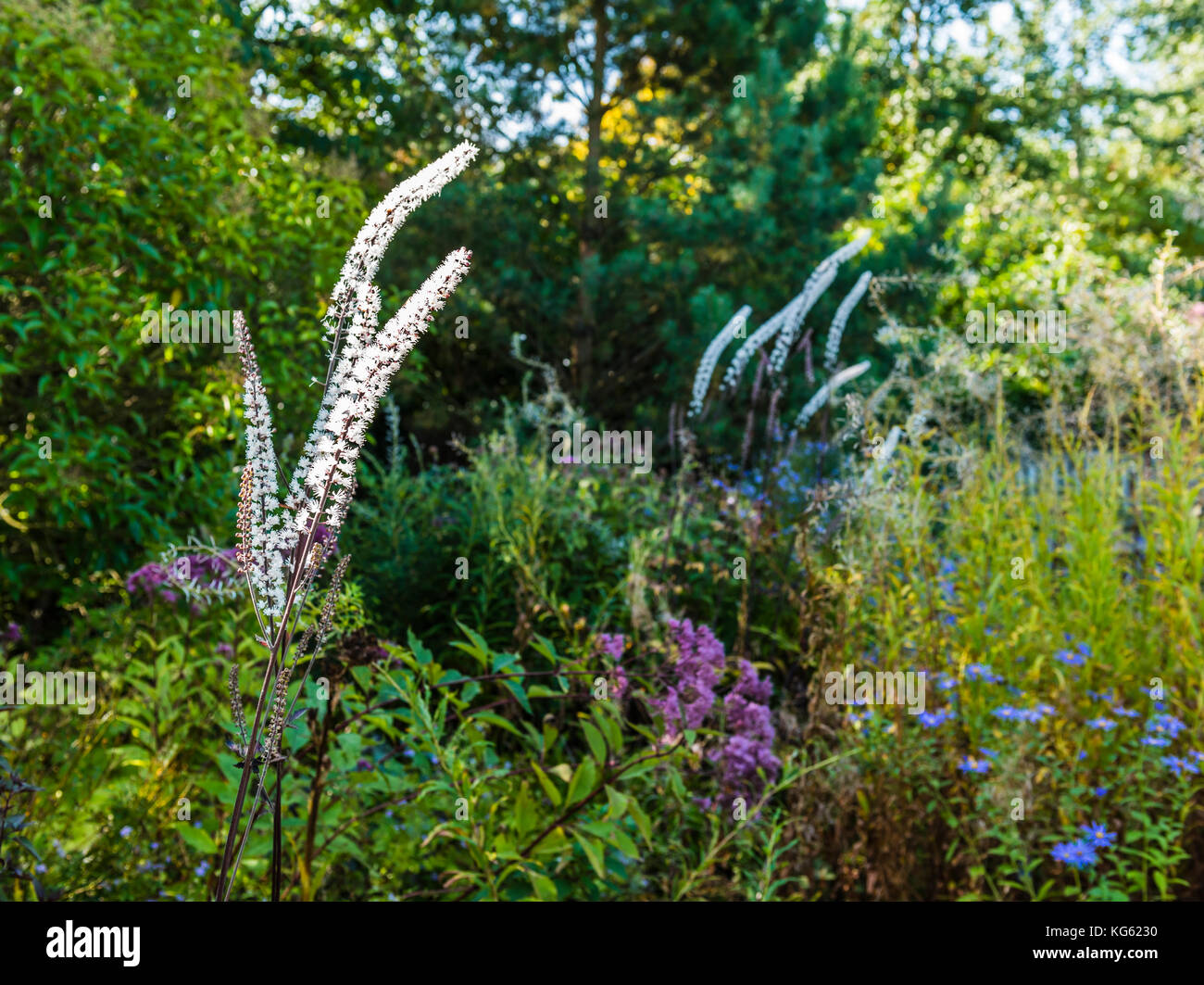 Wildflower meadow garden detail, Le Manoir, Oxfordshire, UK - Stock Image