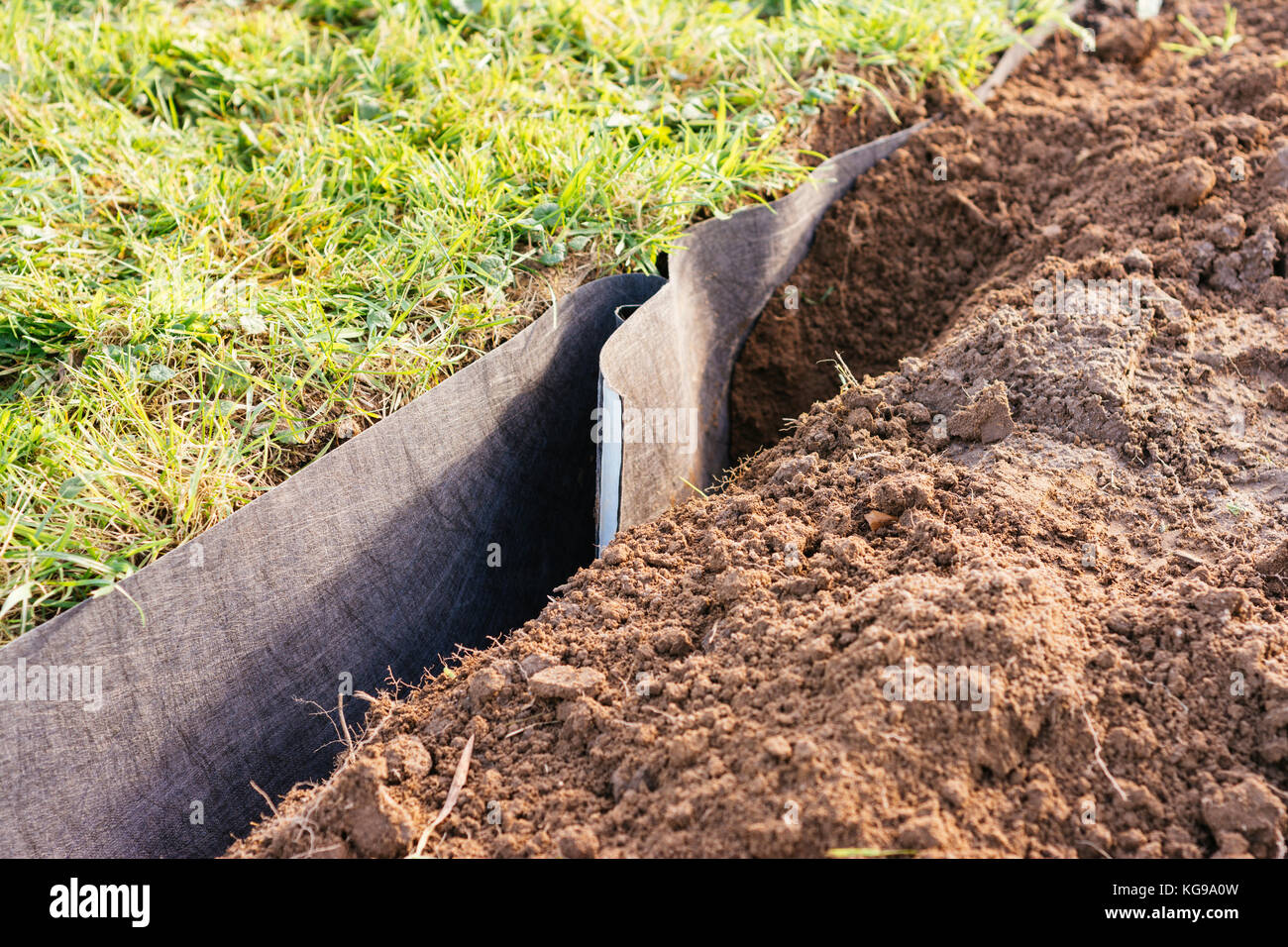 Root barrier being installed in a garden plot for raspberries. - Stock Image