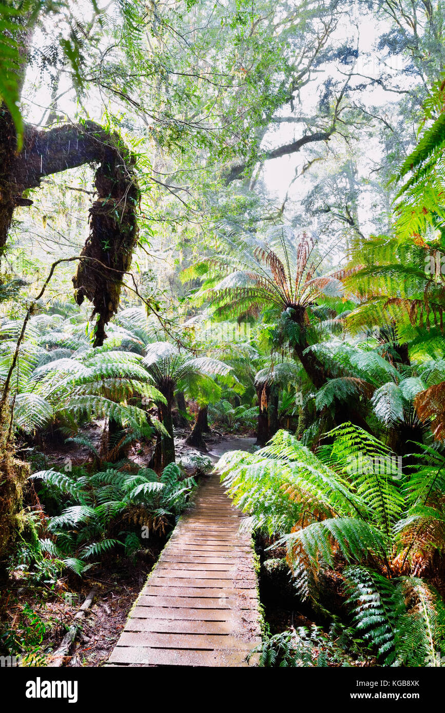 Australia, Victoria: Path in the Great Otway National Park on a rainy morning. A destination along the great ocean Stock Photo