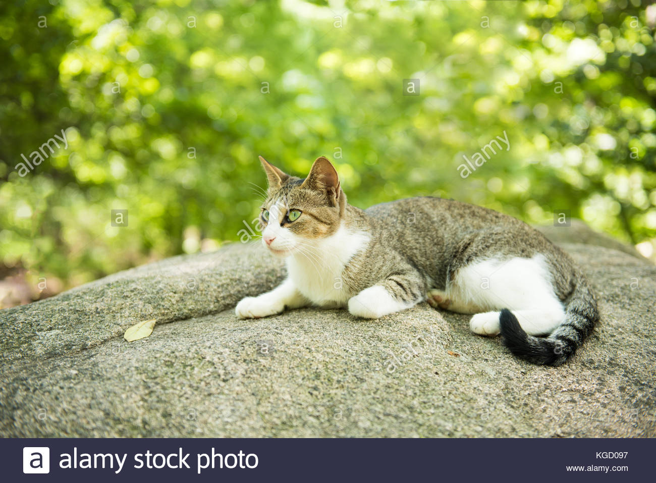 A resting cat in a wooded mountain - Stock Image