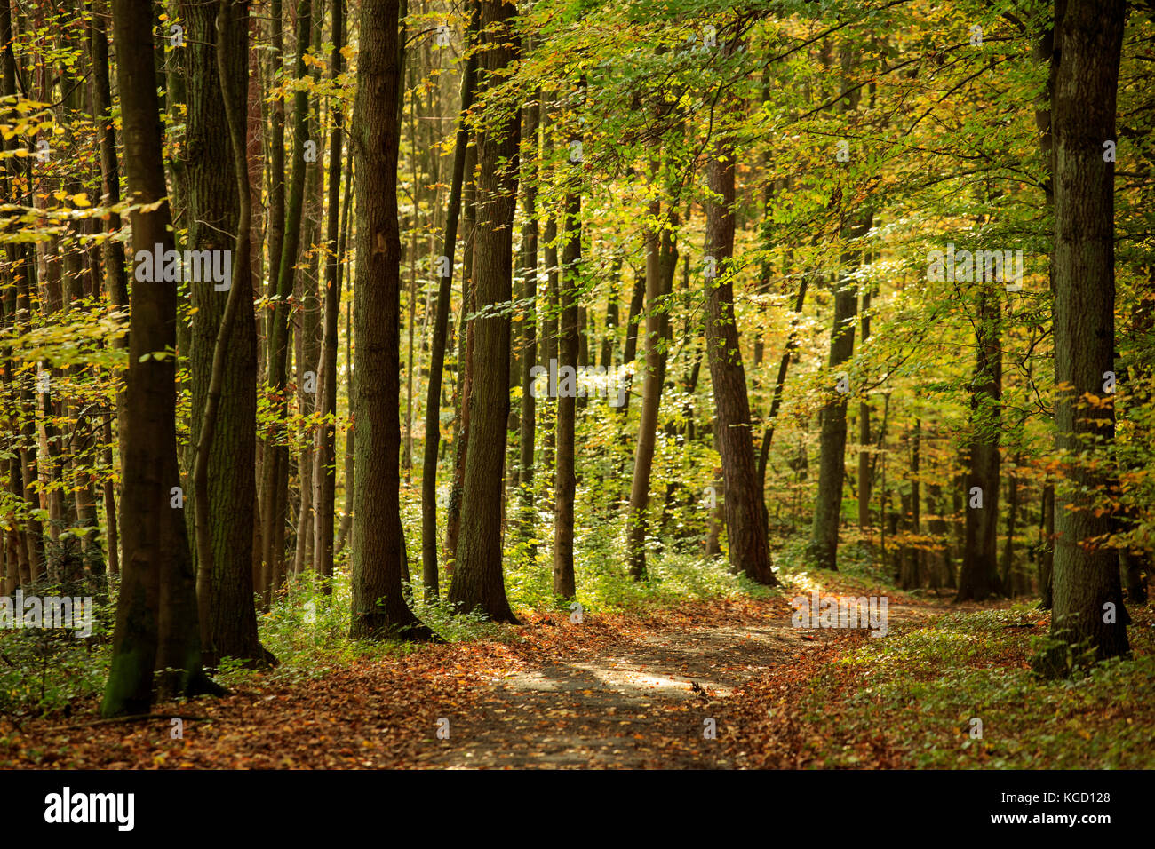 uhlenhorst-forest-aka-broich-speldorfer-
