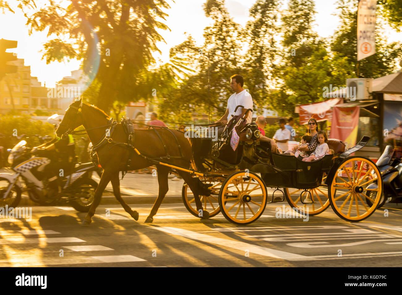 horse-drawn-landau-carriage-with-a-smili