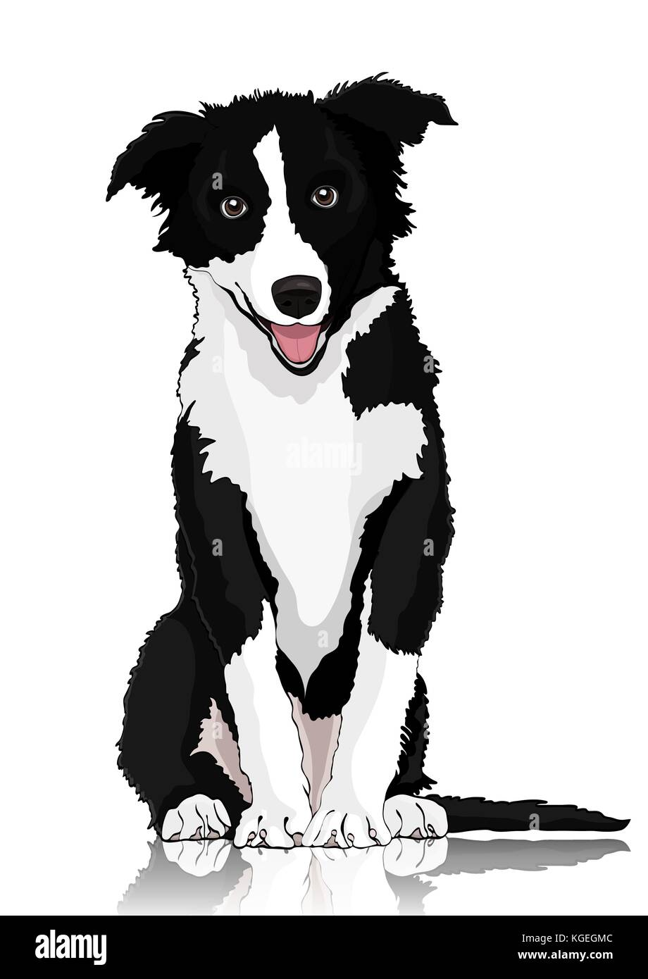 Black White Border Collie On Stock Photos & Black White ...