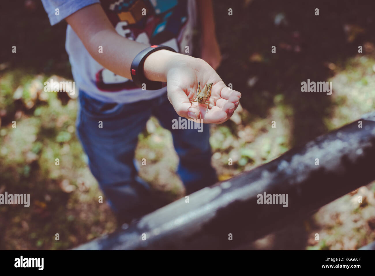 A child holding a grasshopper in their hand - Stock Image