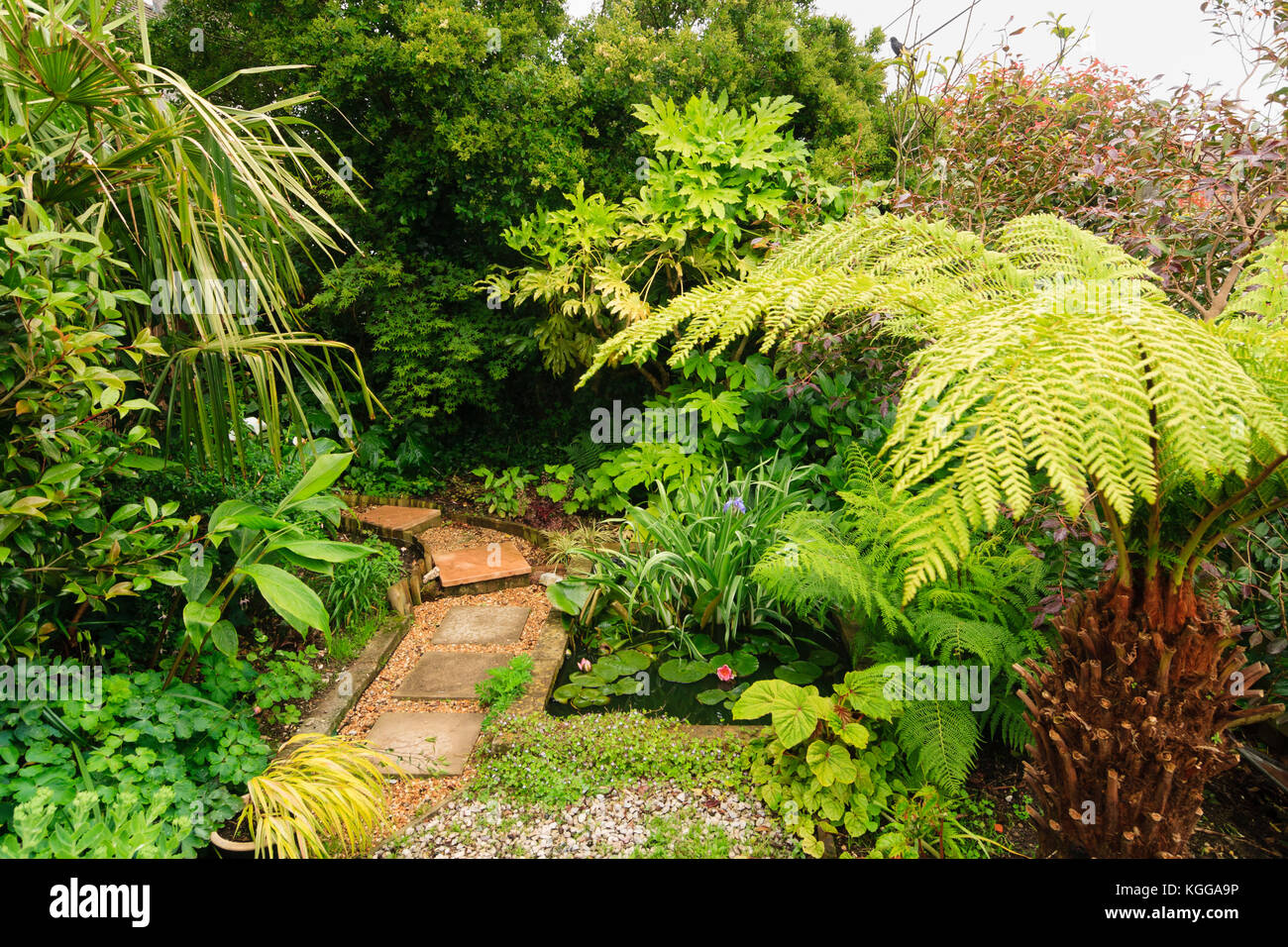 small-garden-pond-in-an-exotic-garden-in-plymouth-uk-surrounded-by-KGGA9P.jpg