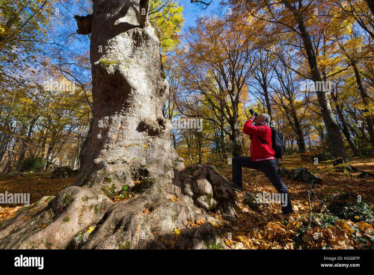 Abruzzo (Italy) - Saint Antonio wood in autumn time. Fall colors. - Stock Image