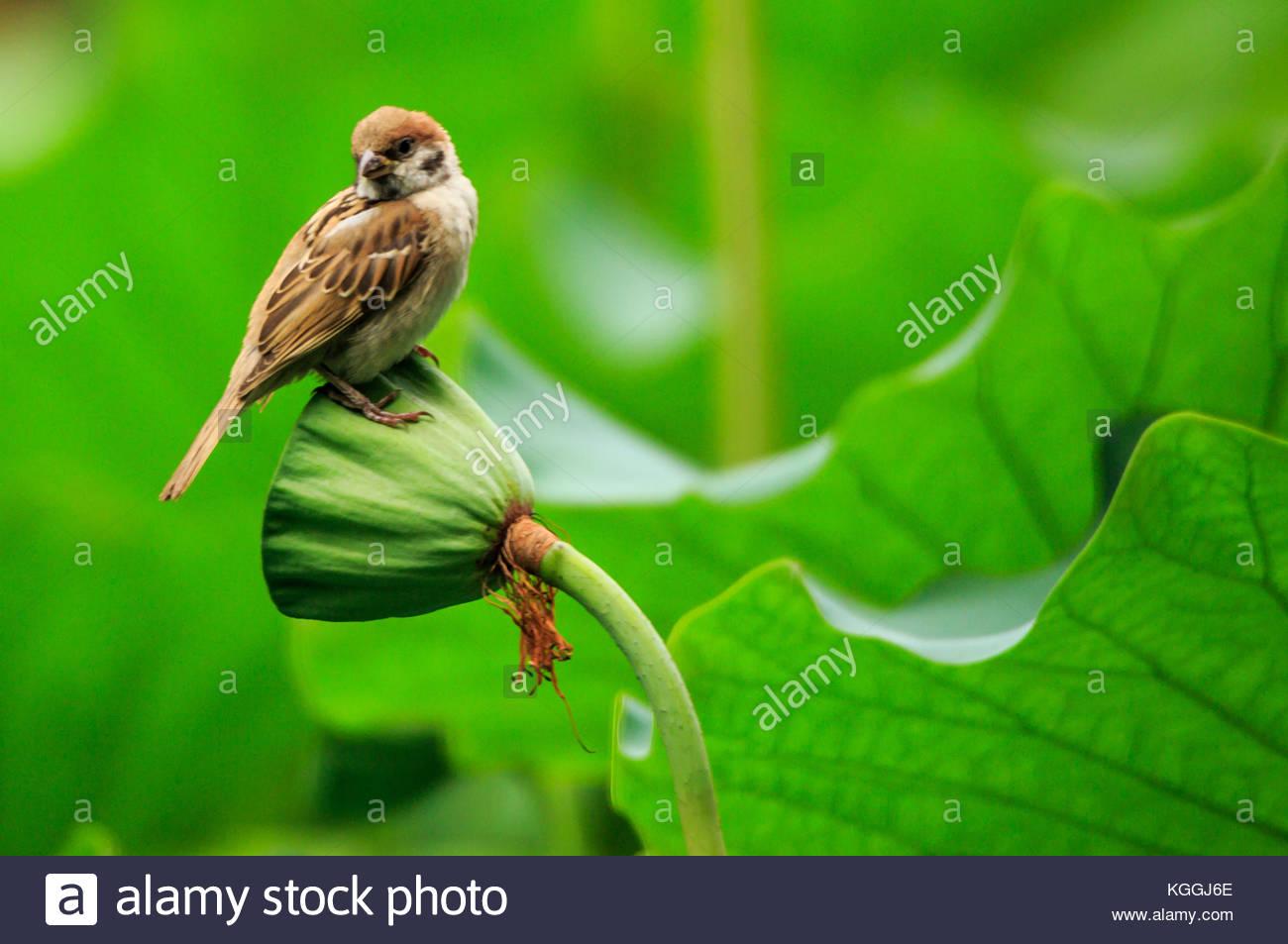 Lotus Bird Stock Photos Amp Lotus Bird Stock Images Alamy